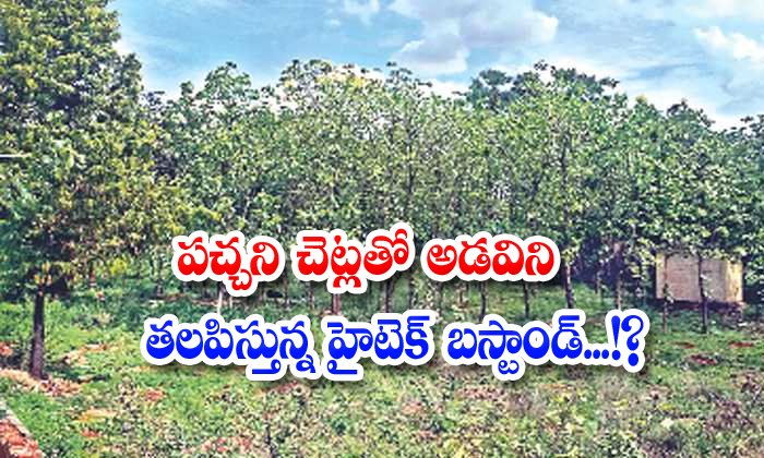 Small Forest At Hitech Bus Stand In Telangana