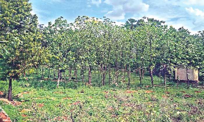 పచ్చని చెట్లతో అడవిని తలపిస్తున్న హైటెక్ బస్టాండ్..-General-Telugu-Telugu Tollywood Photo Image