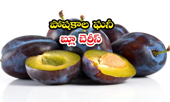 TeluguStop.com -  Nutrient Condition Blueberries