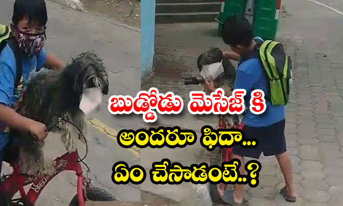 TeluguStop.com - Boy Face Mask Pet Dog Goes Viral
