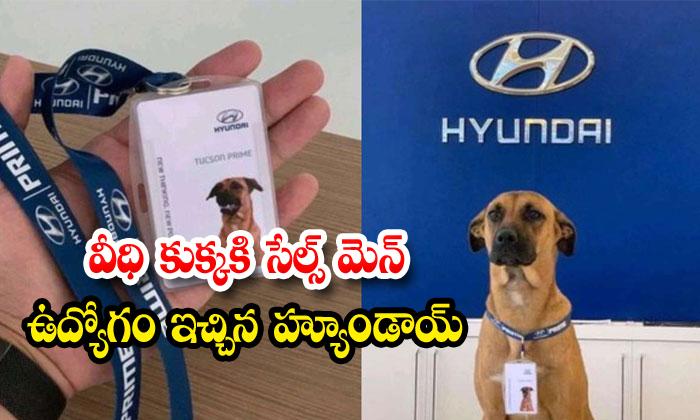 TeluguStop.com - Hyundai Showroom In Brazil Hires Street Dog As Car Salesman