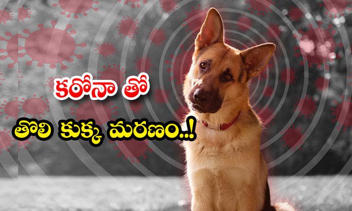 First Dog Died Corona Virus