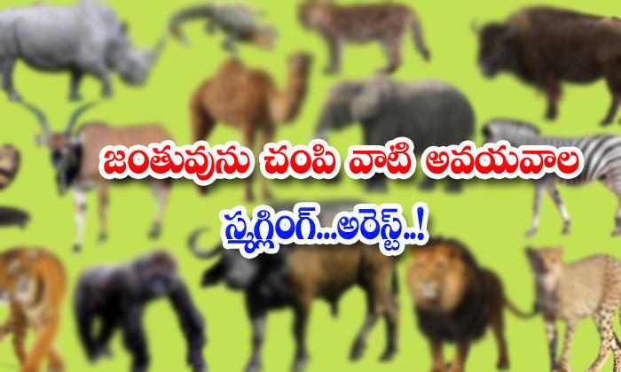 TeluguStop.com - Animals Organs Smuggling