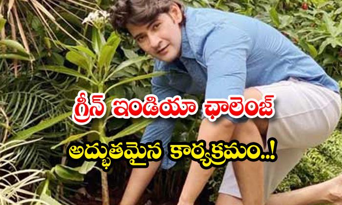 TeluguStop.com - Mahesh Babu Green India Challenge Birthday Photos