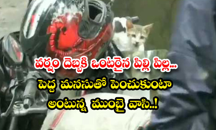 TeluguStop.com - Mumbai Man Saves Kitten Rains Viral Video