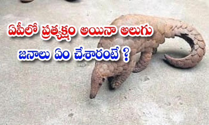 TeluguStop.com - Pangolin Prakasam District Ap
