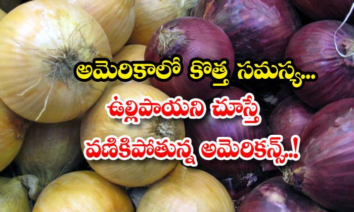 TeluguStop.com - Fda Americans Onions Salmonella Infected