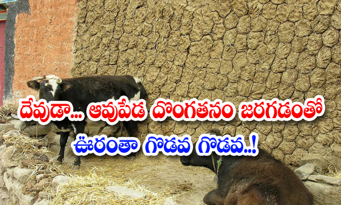 TeluguStop.com - The Whole Village Was In Turmoil As The Cow Dung Theft Took Place