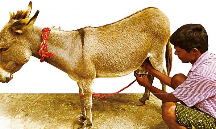 TeluguStop.com - ఇది విన్నారా… త్వరలో గాడిద పాల కేంద్రం పెడుతున్నారట…-General-Telugu-Telugu Tollywood Photo Image