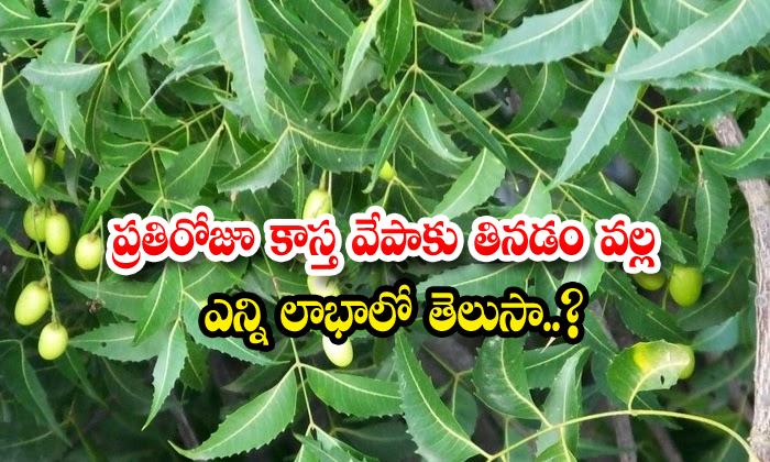 TeluguStop.com - Neem Diabetis Carbo Hidredseyes Kidneys Sugar Levels