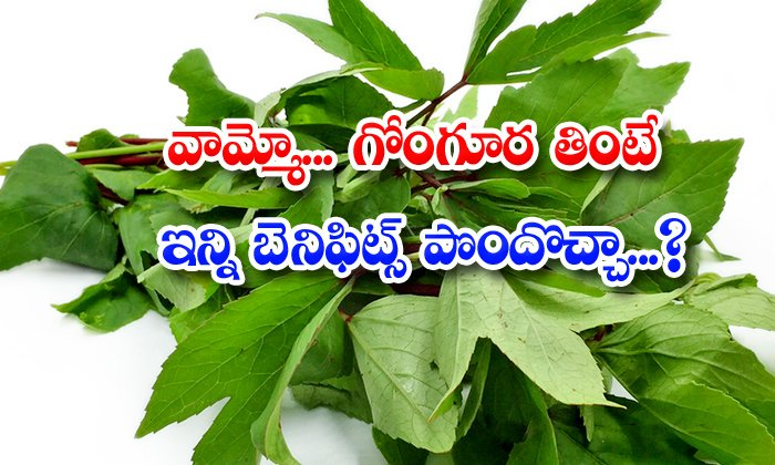TeluguStop.com - Wonderful Health Benefits Of Gongura