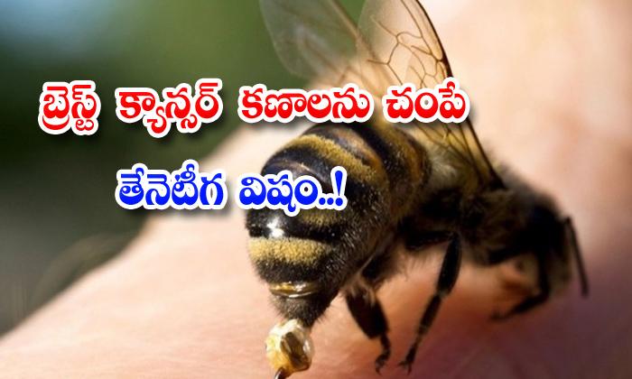 TeluguStop.com - Bee Venom Kills Breast Cancer Cells