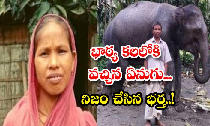 TeluguStop.com - Husband Sells Land Buys Elephant To Fulfill Wife Dream