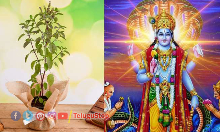 Telugu Bhakthi, Health Problems, How To Perform Tulasi Pooja, Pooja Vidhanam, Tulasi, Tulasi Leaves, Vishnu Bahgawan-Telugu Bhakthi