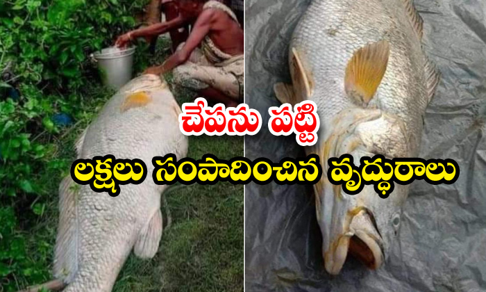 TeluguStop.com - Woman Gets More Money With A Single Huge Fish