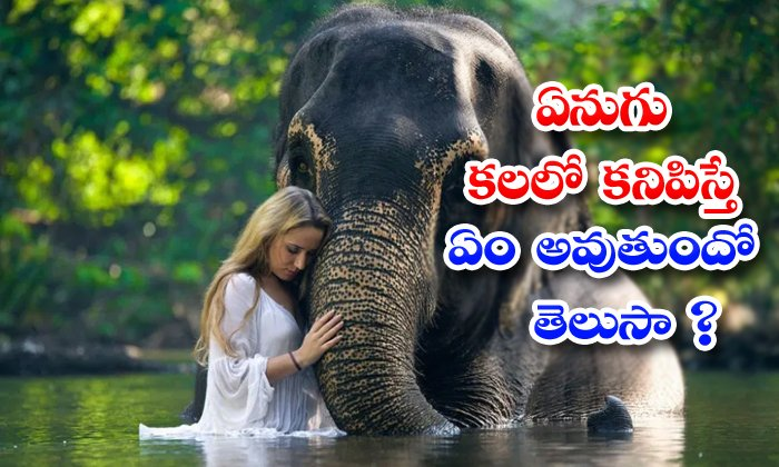 TeluguStop.com - What Happen If Elephant Appears In Your Dream