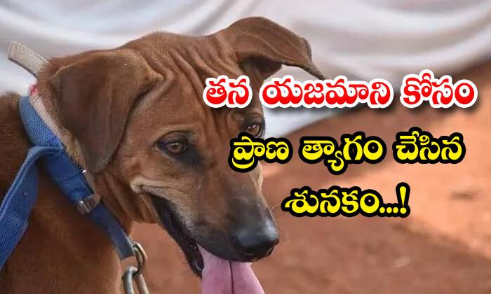 TeluguStop.com - Kerala Dog Electrocuted Death Saves Owner Life