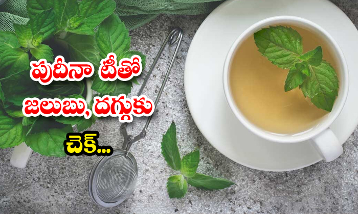 TeluguStop.com - Mint Tea Helps To Recover From Cold And Cough