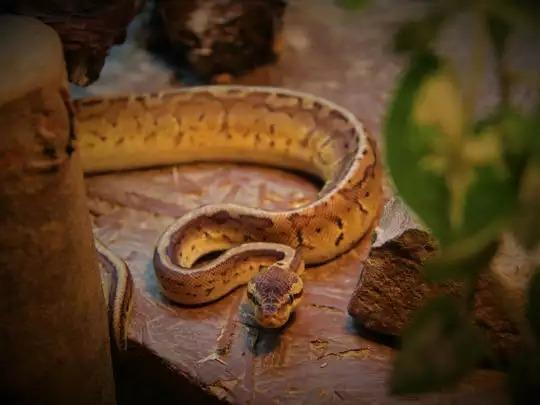 TeluguStop.com - Snake Bites Womans Forehead