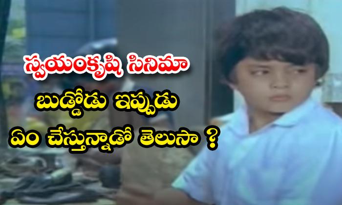 TeluguStop.com - Chiranjeevi Swayamkrushi Movie Child Artist