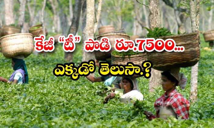 TeluguStop.com - Assam Manohari Gold Tea Sells For Rs 75000 Per Kg At Auction