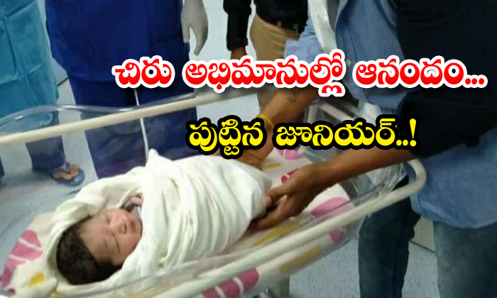TeluguStop.com - Late Actor Chiranjeevi Sarjas Wife Meghana Gives Birth Baby Boy