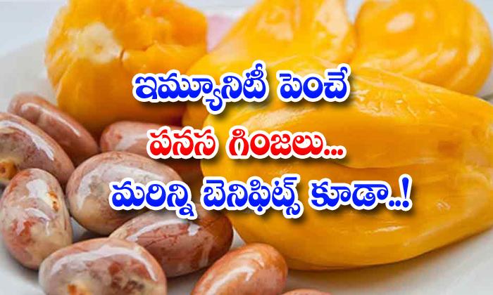 TeluguStop.com - Health Benefits Of Jackfruit Seeds