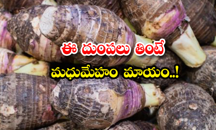 TeluguStop.com - Amazing Benifits Of Taro Root