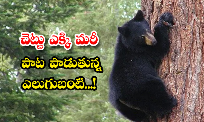 TeluguStop.com - Viral Video Black Bear Climbs Tree Sings Song Us