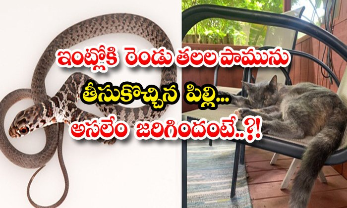 TeluguStop.com - Cat Brought Two Headed Snake