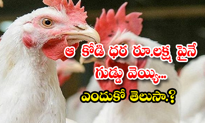 TeluguStop.com - One Lak Cost Hen Eggs Rare Species
