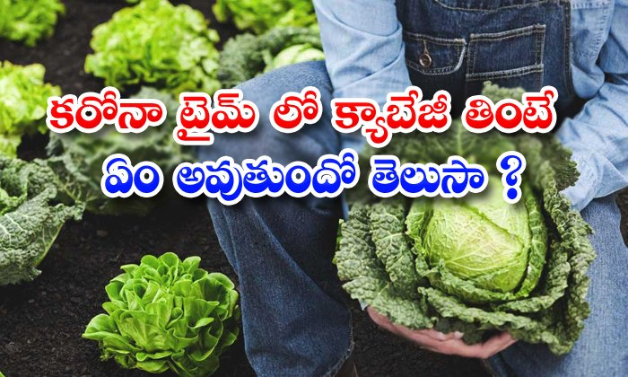 TeluguStop.com - Cabbage Helps To Increase Immune System