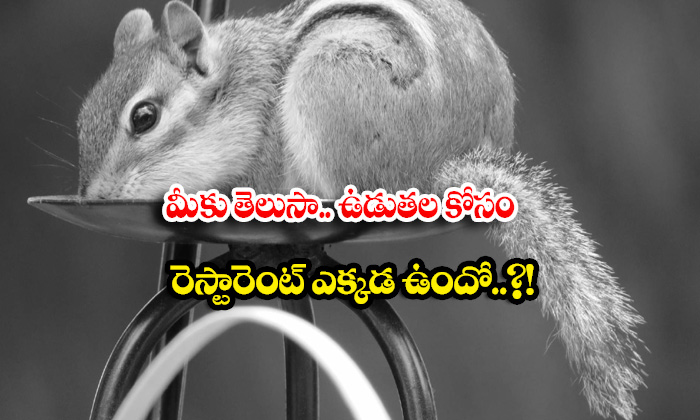TeluguStop.com - Do You Know Where Is The Restaurant For Squirrels