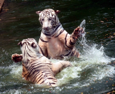 TeluguStop.com - Hyderabad's Gland Pharma Adopts 27 Zoo Animals At Rs 20 Lakh-Environment/Wildlife News-Telugu Tollywood Photo Image