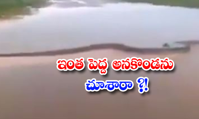 TeluguStop.com - Have You Seen Such A Big Anaconda