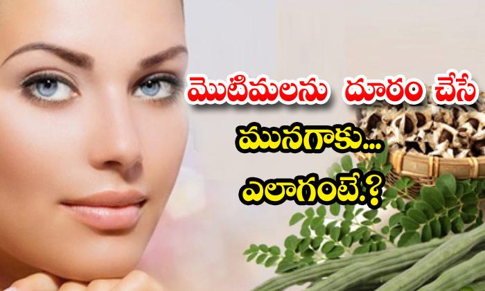TeluguStop.com - Drumstick Leaves Help To Get Rid Of Pimples