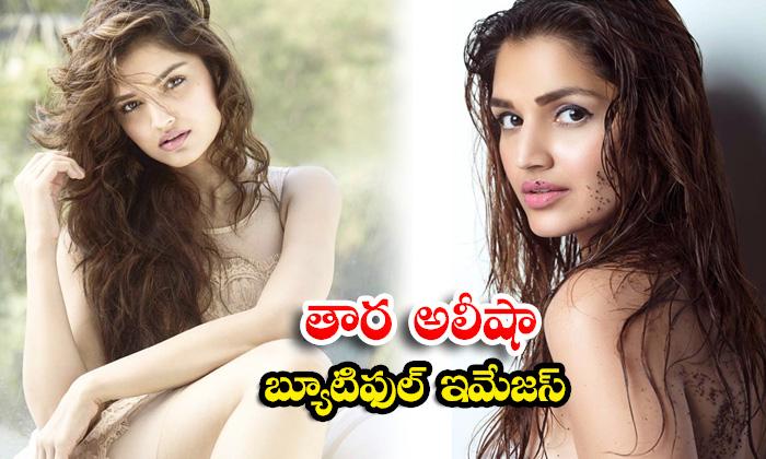 Bollywood beauty Tara Alisha Berry glamorous images-తార అలీషా బ్యూటిఫుల్ ఇమేజస్