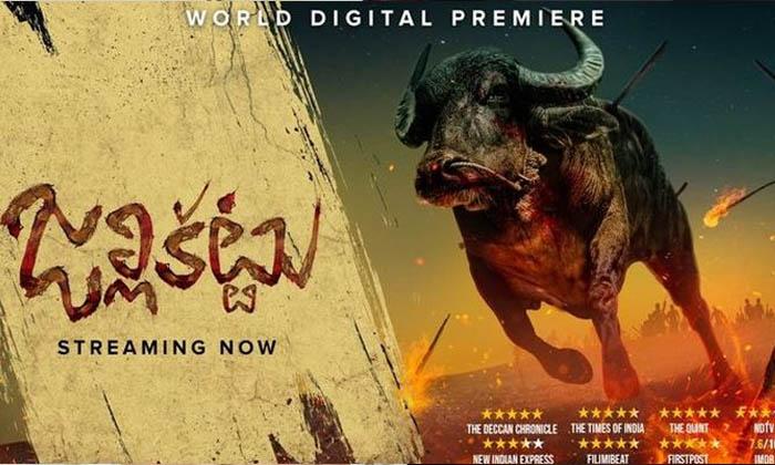 TeluguStop.com - Kangana Ranaut Applauds Jallikattu Official Entry To Oscar.