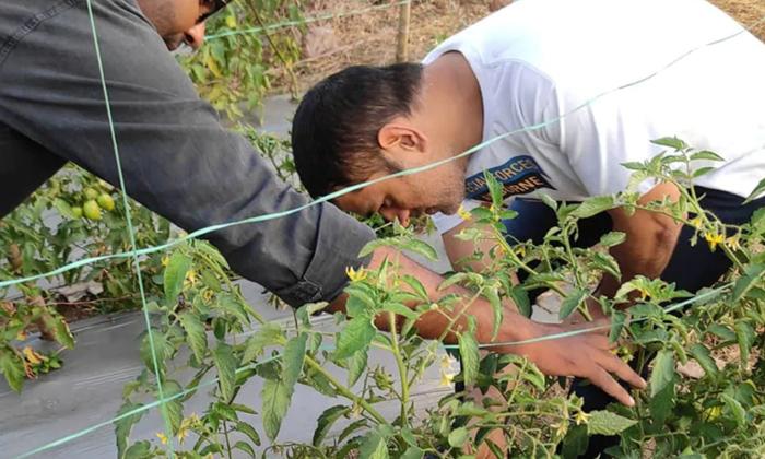 Telugu @dhoniism, @msdfansofficial, Farm House, Farming, Indaia, More Earnings, Ms Dhoni Organic Farming, Ms Dhoni Pea Farming Awareness To Farmers, Ms.dhoni, Msdhoni, Pea Cultivation, Pea Farming, Winter-Latest News - Telugu
