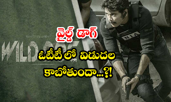 TeluguStop.com - Nagarjuna Wild Dog Movie Ott Release