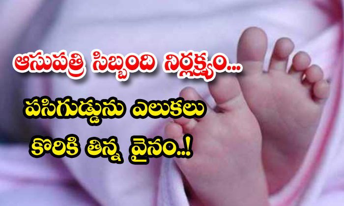 TeluguStop.com - Newly Born Baby Died Up Govt Hospital Negligence