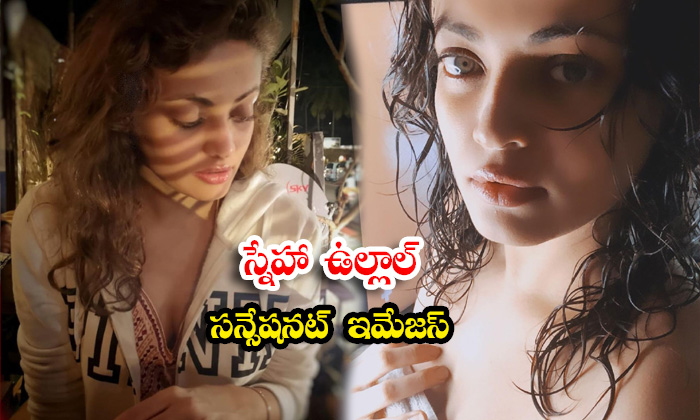 Telugu Glamorous Actress Sneha Ullal gorgeous pictures-స్నేహా ఉల్లాల్ సన్సేషనల్ ఇమేజస్