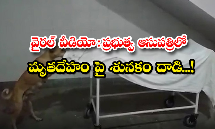 TeluguStop.com - Viral Video Dog Attack On Dead Body In Government Hospital