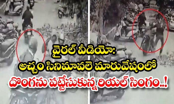 TeluguStop.com - Viral Video The Real Lion Who Caught The Thief In Disguise Like Achcham Movie