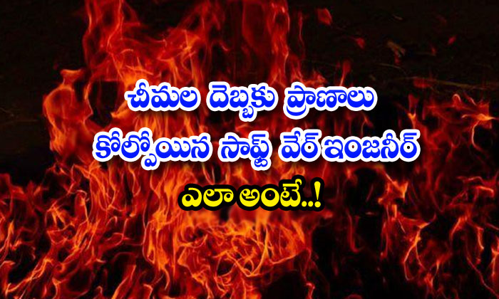 TeluguStop.com - Software Engineer Who Lost His Life To Ant Attack How Is That