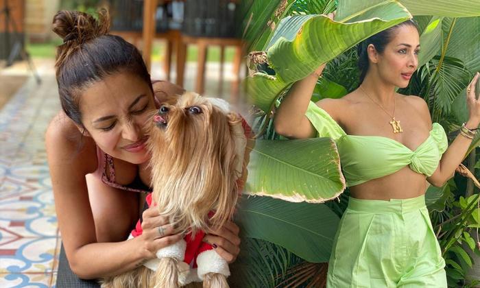 Actress Malaika Arora Glamorous Images-telugu Actress Hot Photos Actress Malaika Arora Glamorous Images - Telugu Amazing High Resolution Photo