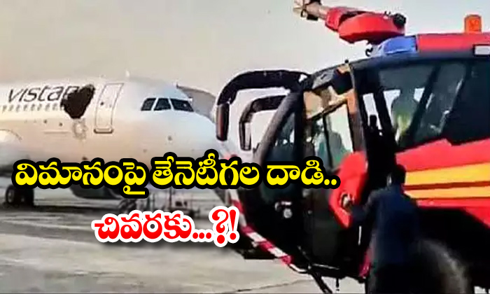 TeluguStop.com - Bees Attack On Aeroplane Finally