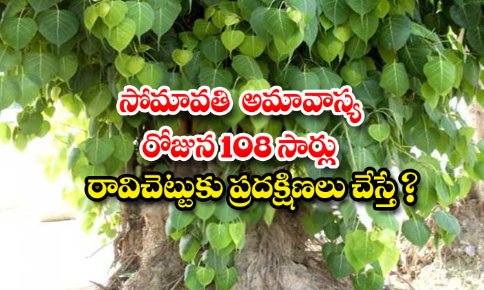 TeluguStop.com - What If Circled The Pipal Tree 108 Times On The Day Of The Somavati New Moon