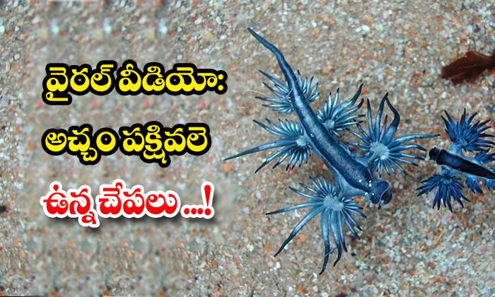 TeluguStop.com - Fish Look Like A Bird Beach