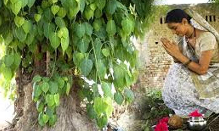 TeluguStop.com - సోమావతి అమావాస్య రోజున 108 సార్లు రావిచెట్టుకు ప్రదక్షిణలు చేస్తే-Devotional-Telugu Tollywood Photo Image